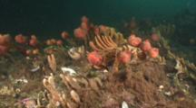 Cold Water Reef, Passamaquoddy Bay Near Bay Of Fundy, Eastport, Maine, Usa, North Atlantic Ocean.