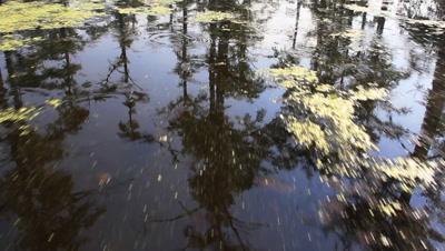 Gimbal Shot of Swamp