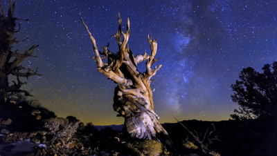 4K Bristlecone Pine Time Lapse with Milky Way