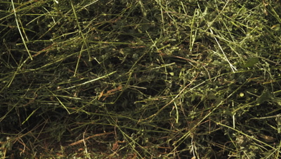 Close-up panning shot of peices of hay and grass.