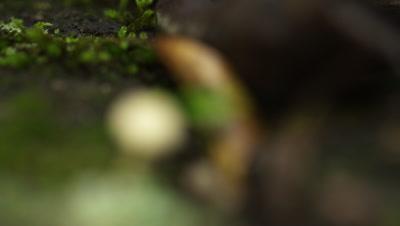 White mushroom and seedling amongst other forest detritus