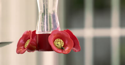 Slow motion of Hummingbird getting a drink from feeder.