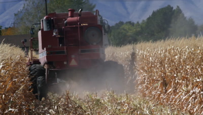 A combine cutting a corn field going away from the camera.