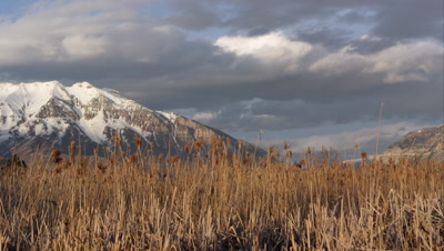 Time lapse of clouds over snow capped mountains and field of tamarisk grass.
