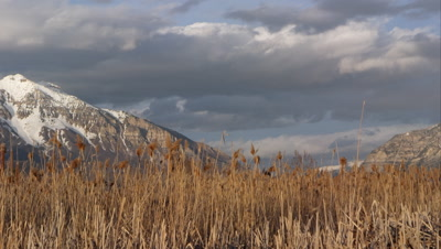 Slow moving clouds above snow capped mountains and field of tamarisk grass.