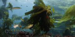 Kelp Forest Scenic With Fish Under Kelp In Current