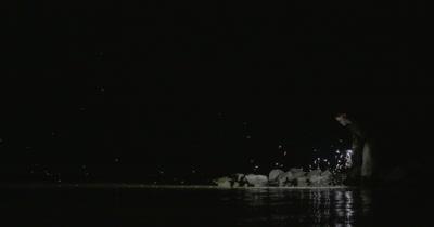 Mayflies swarming toward the light