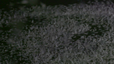 Mayflies swarming and mating surface of the water, SLOW MOTION
