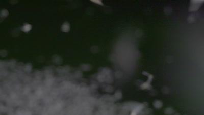 Mayflies flying in slow motion
