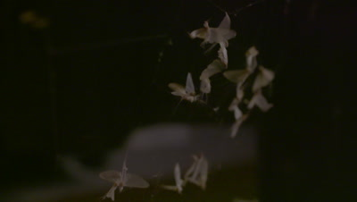 Dead mayflies in the spider's web