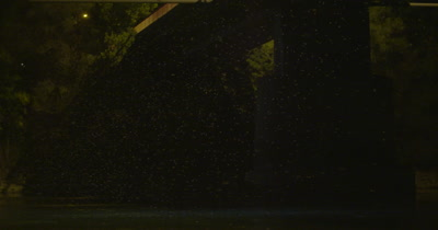Mayflies swarming under the bridge