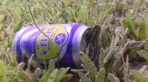 Blenny Hiding In Beercan