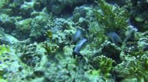 Fish Caring For Eggs