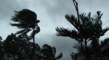 Palm Trees Blow In Wind As Hurricane Approaches