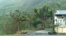 Palm Trees Thrash In Strong Wind As Hurricane Approaches