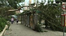 Fallen Trees During Tropical Storm