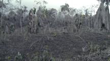 Vegetation Damaged Severely By Volcanic Ash From Eruption Of Mount Merapi
