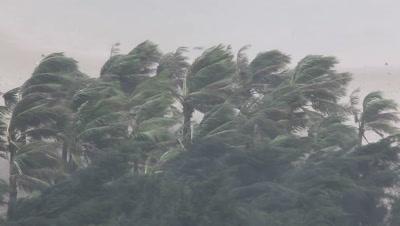 Extreme Hurricane Winds Lash Palm Trees