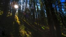 Time Lapse Sunrise Above Whitebark Pine Forest
