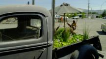 Old Gray Truck Converted To Water Garden, Fountain, Water Hyacinth Next To Street