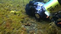 Diver Photographs Flamboyant Cuttlefish On Sand