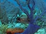Squirrelfish And Seafan