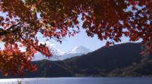 Autumn Leaves And Snowcapped Mt. Fuji, Japan