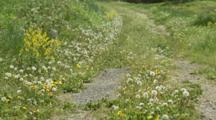 Path With Dandelion Flowers And Seed Heads