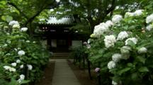 Path To Building Lined With Hydrangeas