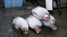 Frozen Tuna Carcasses At Tsukiji Market In Japan