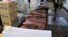 Tuna Fish Placed At Tsukiji Market In Japan