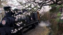 Locomotive Moves Past Flowering Trees In Alishan National Scenic Area, Taiwan