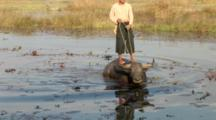Young Man Standing On Back Of Water Buffalo Wading In Lake
