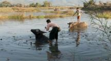 Boys Standing On Back Of Water Buffalo Wading In Lake