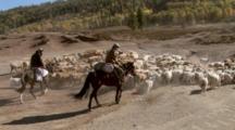 Men Riding Horses Herding Sheep Or Goats
