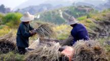 People Threshing Rice In Field