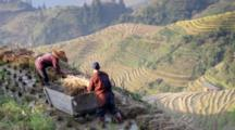 People Threshing Rice In Field Above Terraces
