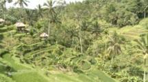 Panoramic Overlook Of Rice Terraces In Bali, Indonesia