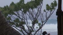 Stormy Ocean Waves Behind Wind-Blown Tree