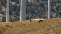 Horses Graze Below Wind Turbines