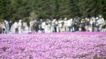 Tourists Visit Spectacular Flower Fields