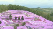 Tourists Visit Spectacular Hillside Flower Fields