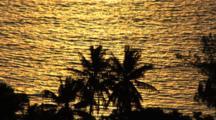 Golden Light Of Sunset On Calm Ocean Silhouettes Palm Trees