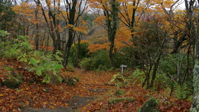 Fall Forest, Hakone, Kanagawa, Japan