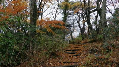 Forest Stairs, Hakone, Kanagawa, Japan