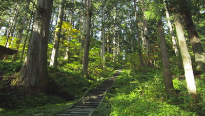Cedar forest in Mt. Haguro in Yamagata Prefecture, Japan
