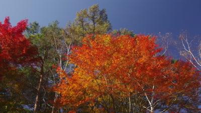 Autumn foliage in Urabandai