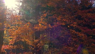 Autumn Leaves, Takayama, Japan