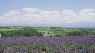 Flower field in Biei, Hokkaido, Japan