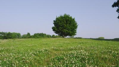 Maple trees in Misato Park, Misato City, Saitama Prefecture, Japan